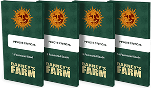 peyote-critical_packet_1_seed